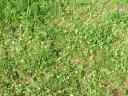 Земляничная полянка