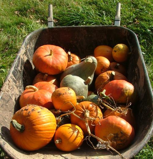 Мой тыквенный урожай 2010 года